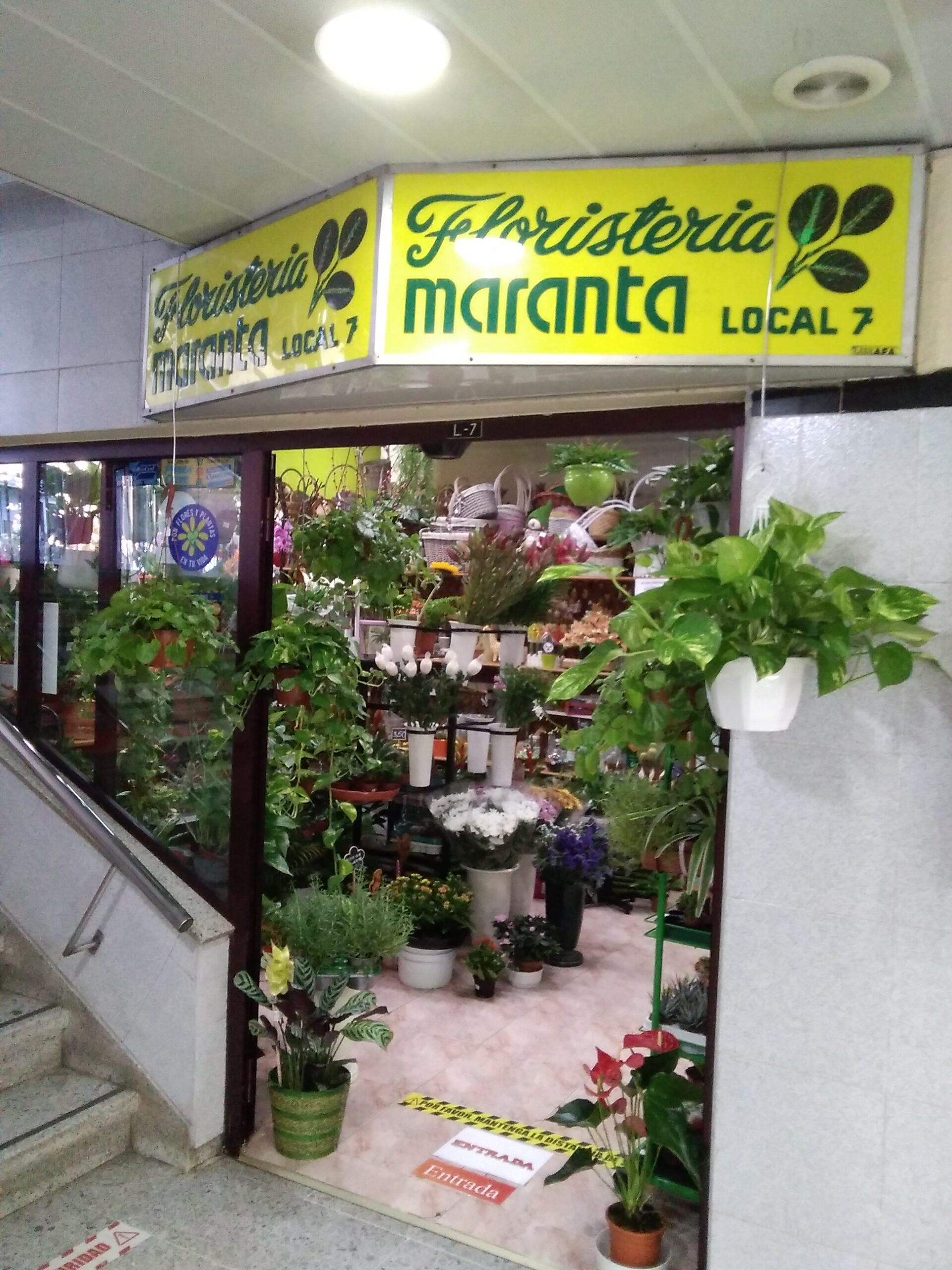 Floristería Maranta